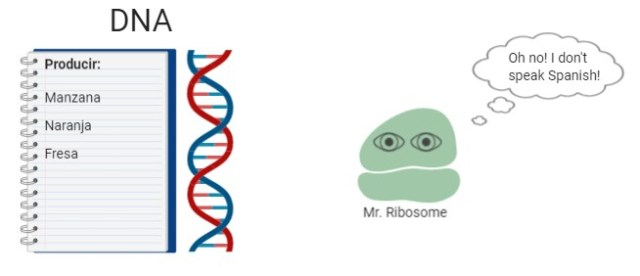 DNA_RNA RT-PCR1