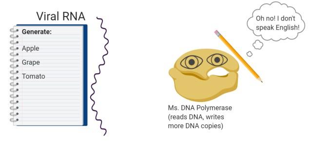 VirusRNA-PCR