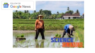 https://scienceclever.com/haryana-contribution-in-agriculture-in-india/