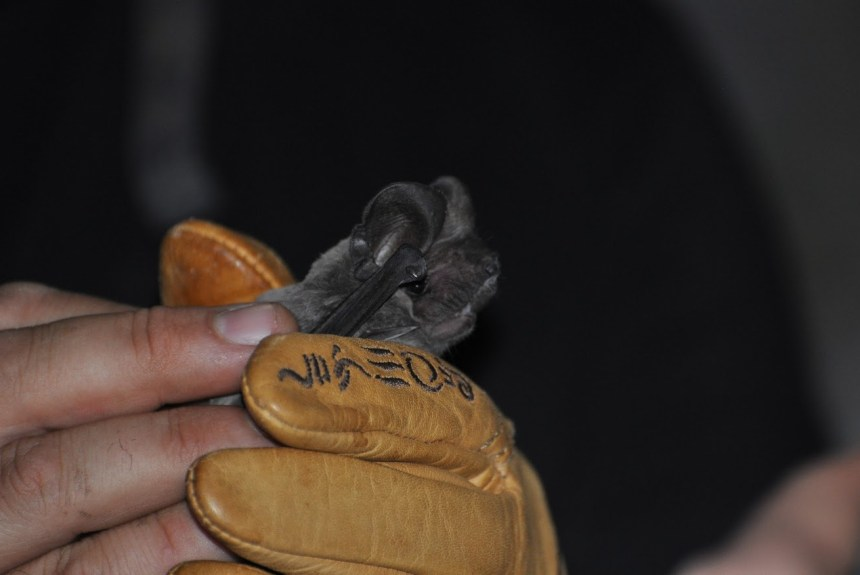 We start bats conservation project funded by the LIFE programme