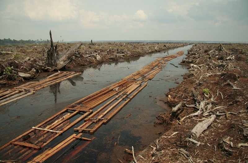 Deforestation Effects, Causes, And Examples: Top 10 List