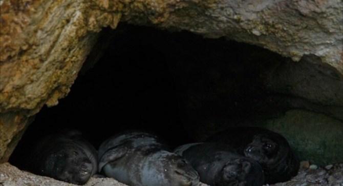 Mediterranean Monk Seal Cave