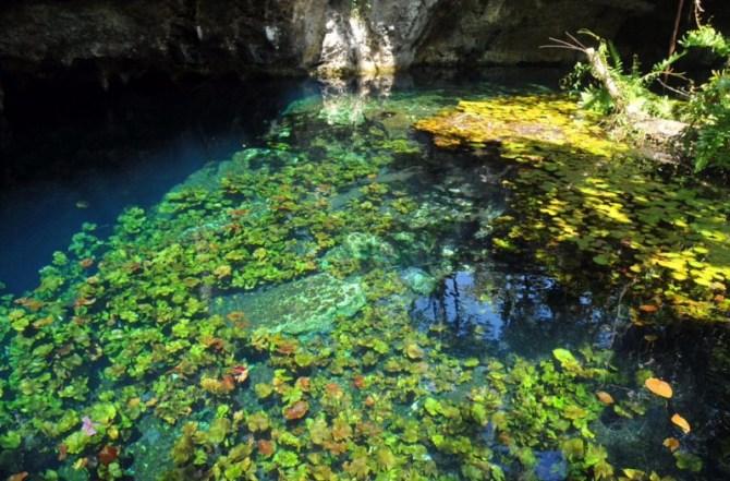 Cenote Olmec