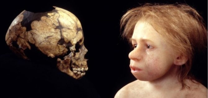 Recreation of Neanderthal infant from skull