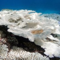 Ocean Acidification Causes, Effects, & Examples: Top 10 List