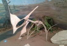 Pterodactyl fossil reconstitution