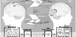 Brain to brain communication system
