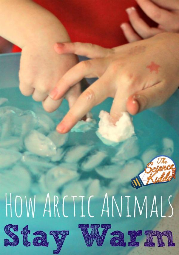 Which Arctic Animals Love Math