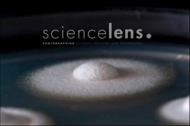 Molecular BioSciences, Massey University