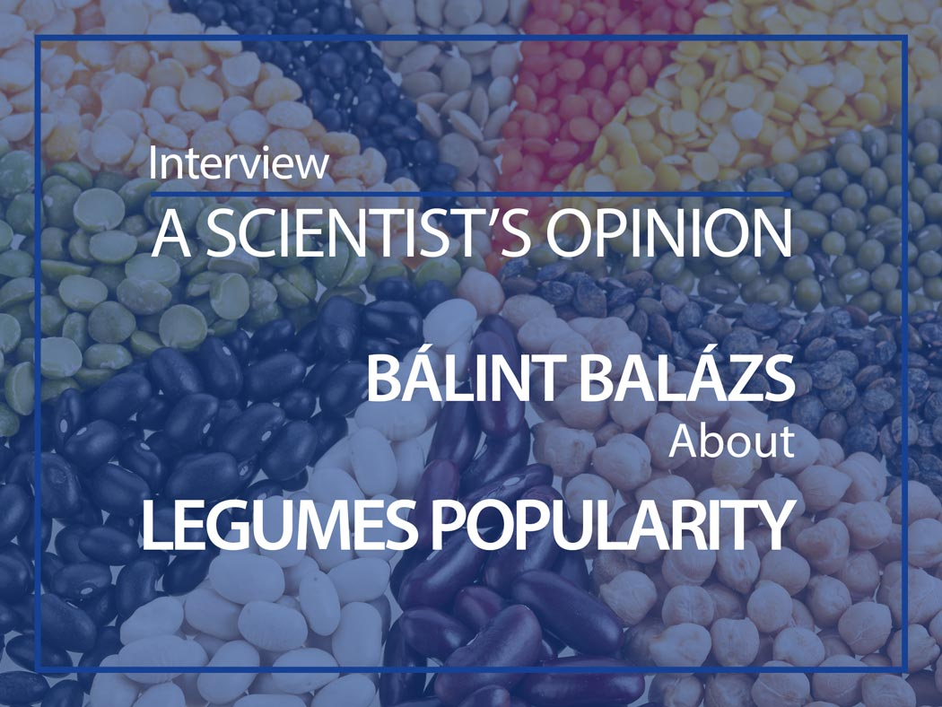 A scientist's opinion : Interview with Bálint Balázs about Legumes popularity