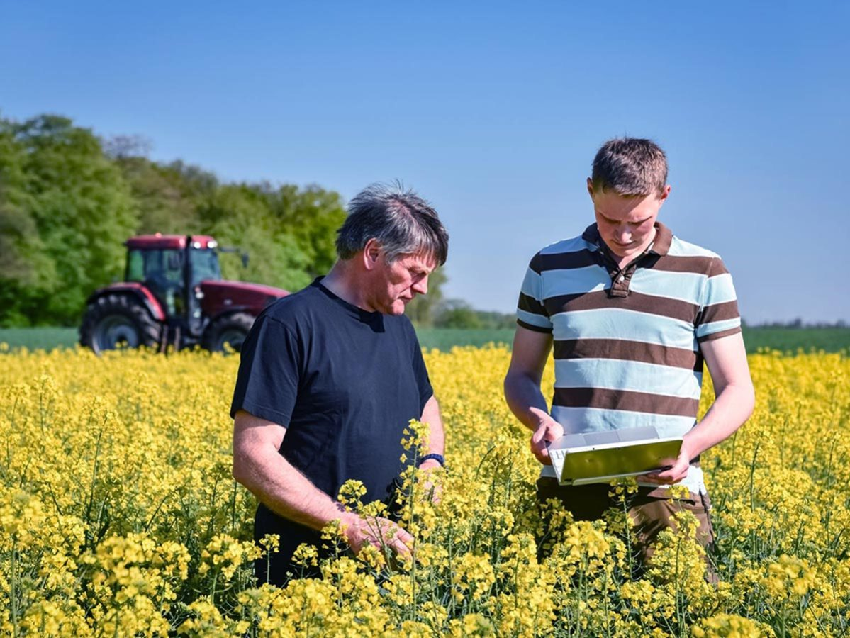 2 farmers in a rapeseed field