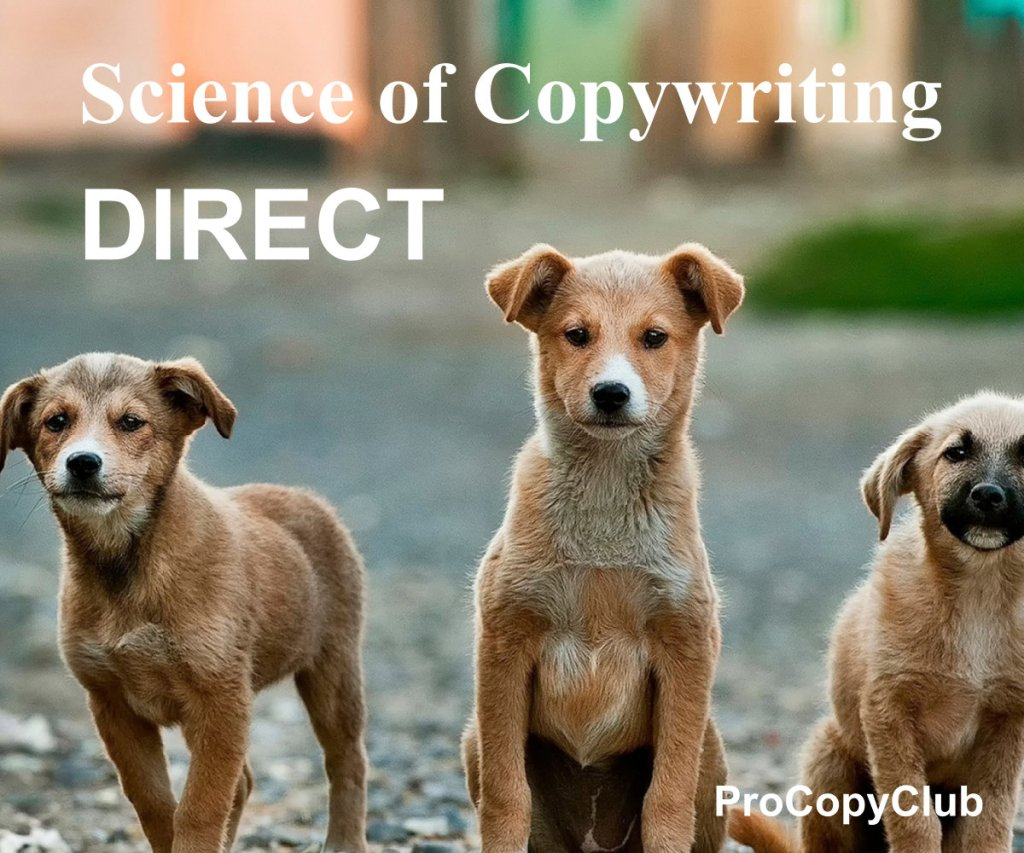 How To Write Direct Emails That Don't Need A Hard Sell - image of 3 dogs