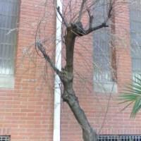 Pon nombre al árbol