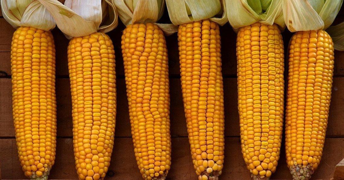 Désaccord entre Justice et scientifiques de l'UE sur les contours de la notion « OGM »