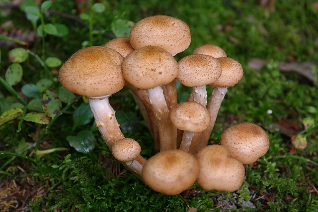 mushrooms-223114_640