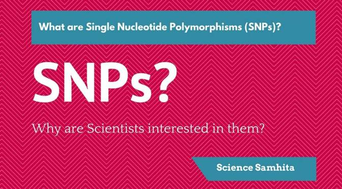 What are SNPs? Why are Scientists interested in them?
