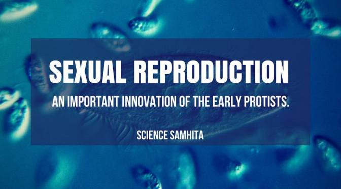 Sexual Reproduction – An Important Innovation of the Early Protists.