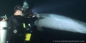 Dauphin demandant de l'aide à un plongeur