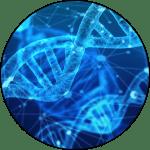 Diagram of DNA