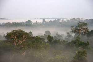 Cientista afirma que a Amazônia vai secar e se tornar árida em 2064