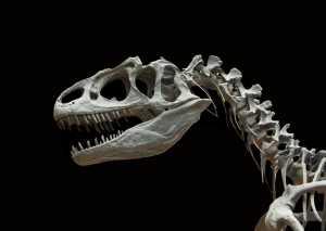 Investigação indica que a exportação de fósseis do dinossauro brasileiro pode ter violado as leis do país