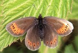 Cientista se arrisca em rapel para estudar borboleta rara