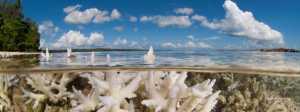 O tempo está se esgotando para os recifes de corais: novo relatório