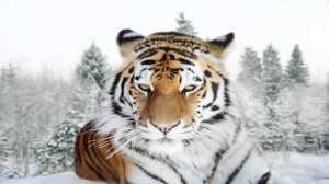 14 animais trazidos de volta da beira da extinção