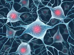 Pesquisadores identificam genes responsáveis pelo processo de envelhecimento saudável