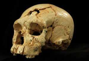 Achados fósseis israelenses revelam um novo grupo hominídeo de Nesher Ramla