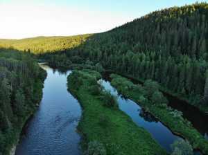 Florestas russas são cruciais para a moderação global do clima