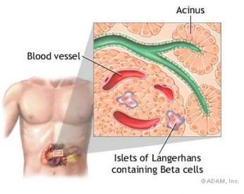 http://www.pre-diabetes.com/medical/definition-pancreas.html