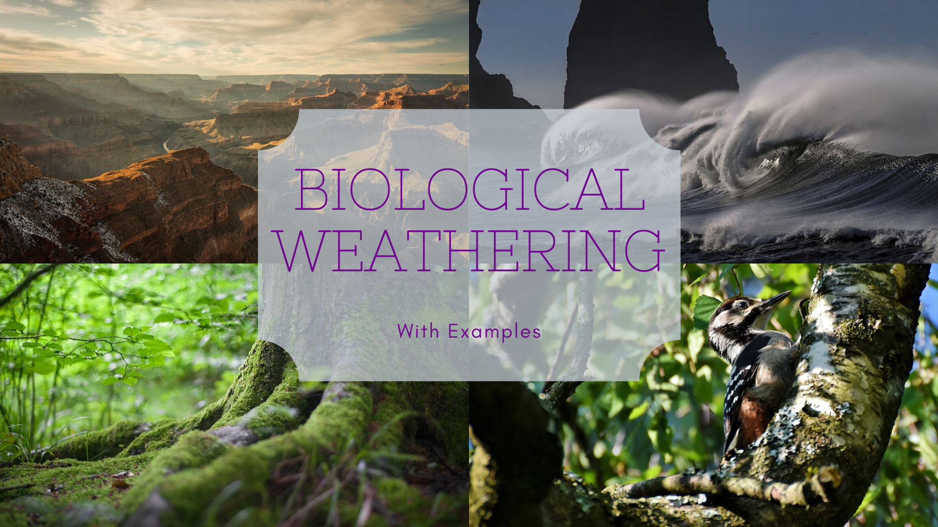 Biological Weathering Examples And Definition