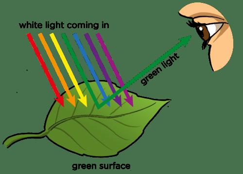 பொதுஅறிவு - கேள்வியும் பதிலும் (தொடர்) Seecolor
