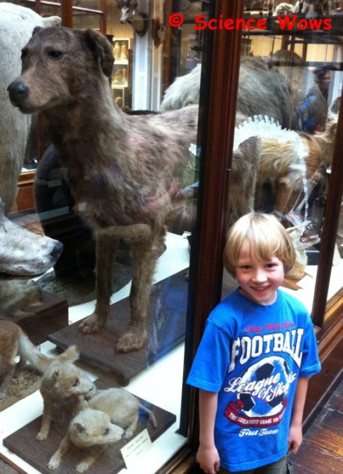 Culann with his hound