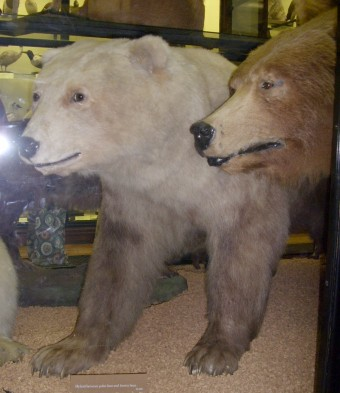 Do you know what kind of bear this is (the one on the left)?