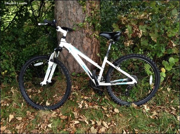 Bike and Tree
