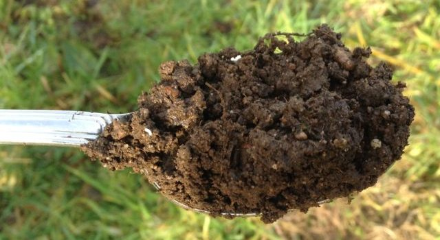 The Science of Soil