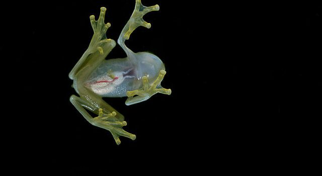Fifteen fantastic facts about frogs
