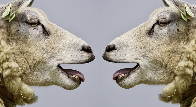 Can animals talk to each other?