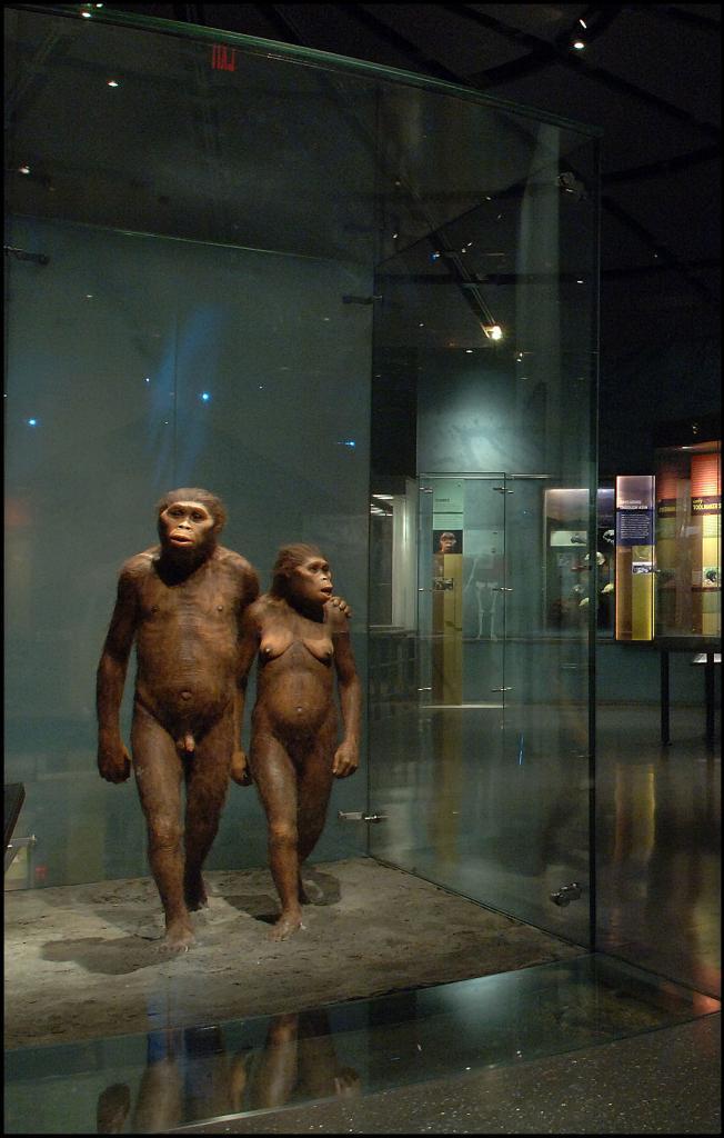 Bigger brains led to bigger bodies in our ancestors