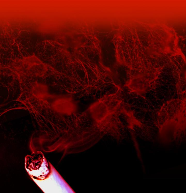 One more reason to swear off tobacco: The inflammatory trap induced by nicotine