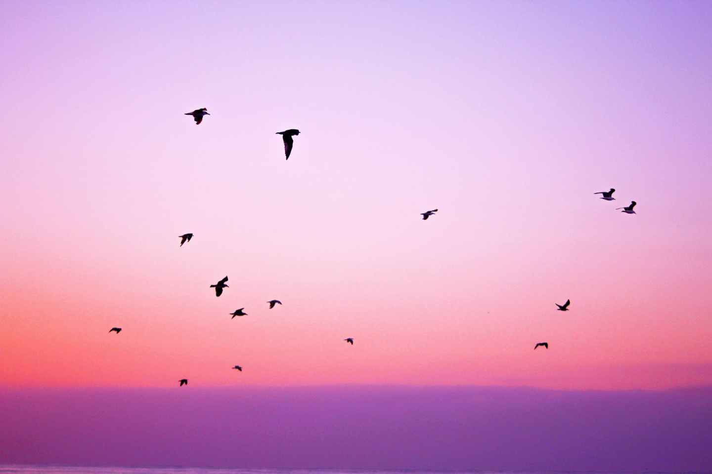 nature sky bird animals