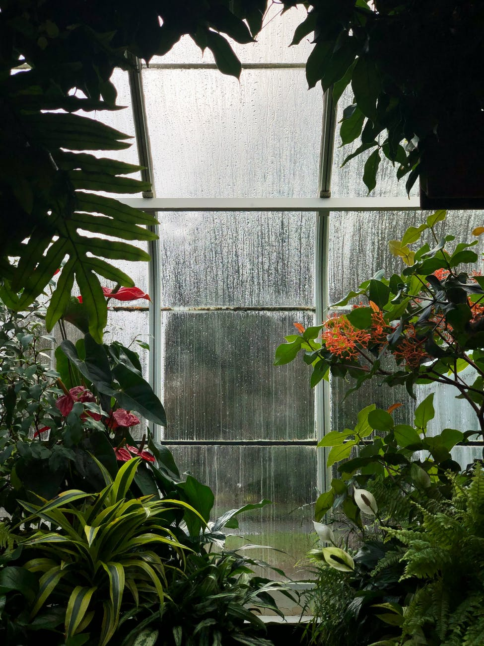 green and red plants inside greenhouse