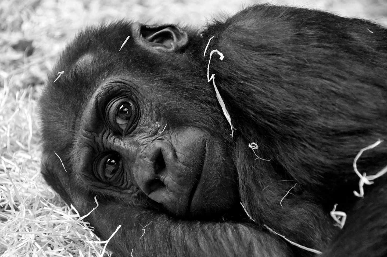 animal cute zoo face