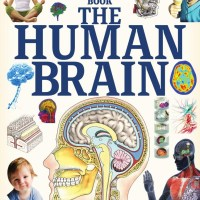 How It Works The Human Brain - 30 June 2020