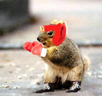 boxing_squirrel.jpg