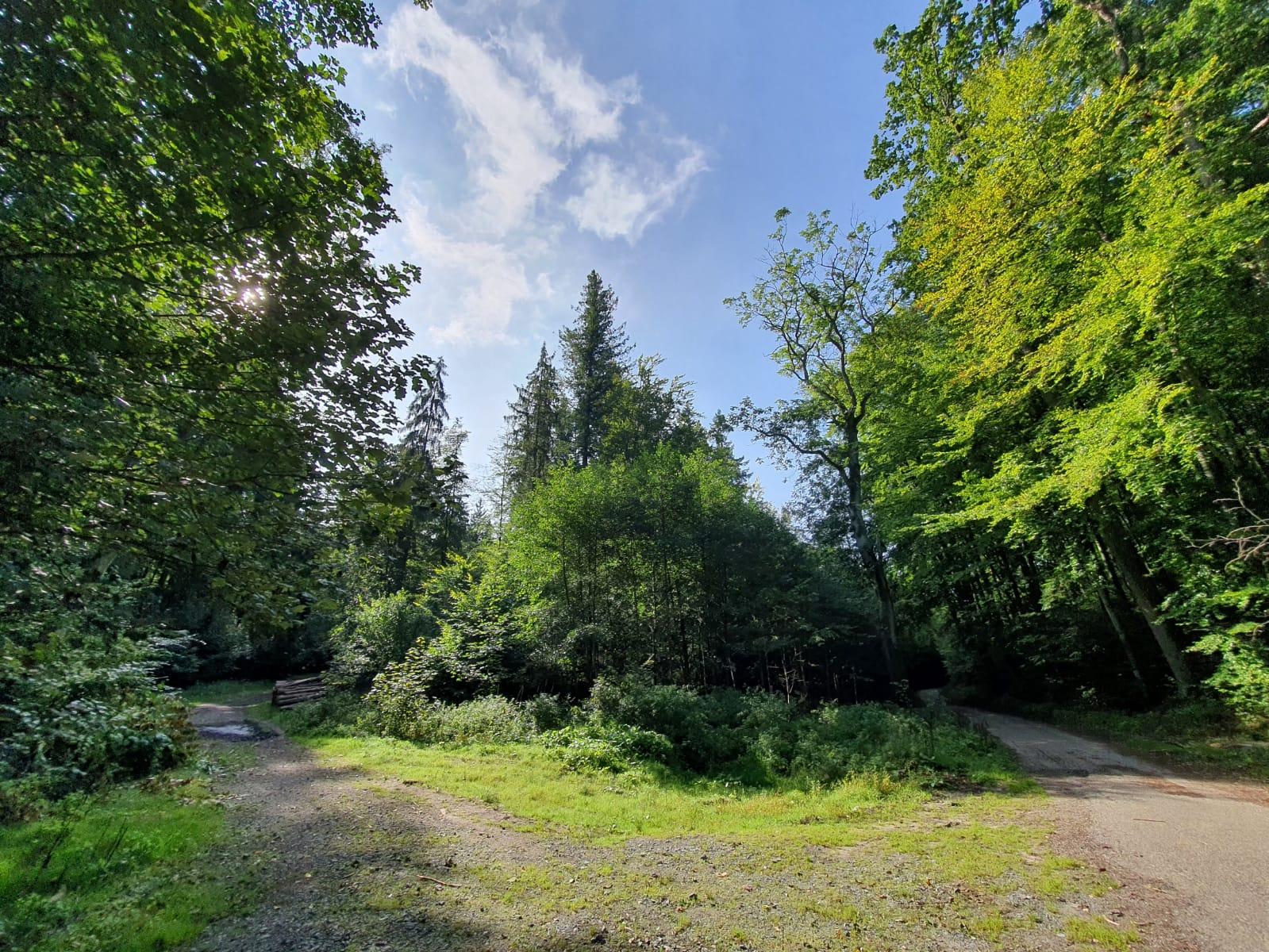 Lasy Oliwskie