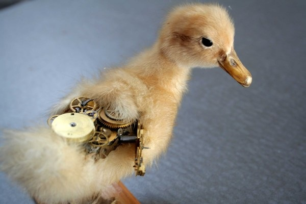 543381194753445 thumb Extreme Steampunk Beyond the Grave Terminal Techno Taxidermy
