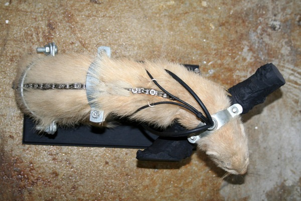 543381225164478 thumb Extreme Steampunk Beyond the Grave Terminal Techno Taxidermy